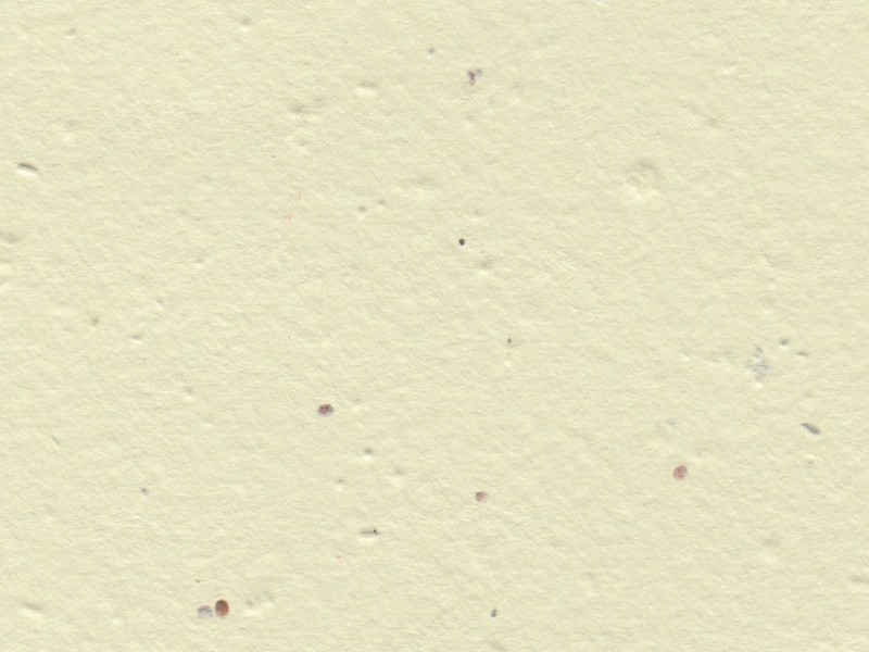 Handmade seeded paper in cream by Plantable Seed Paper